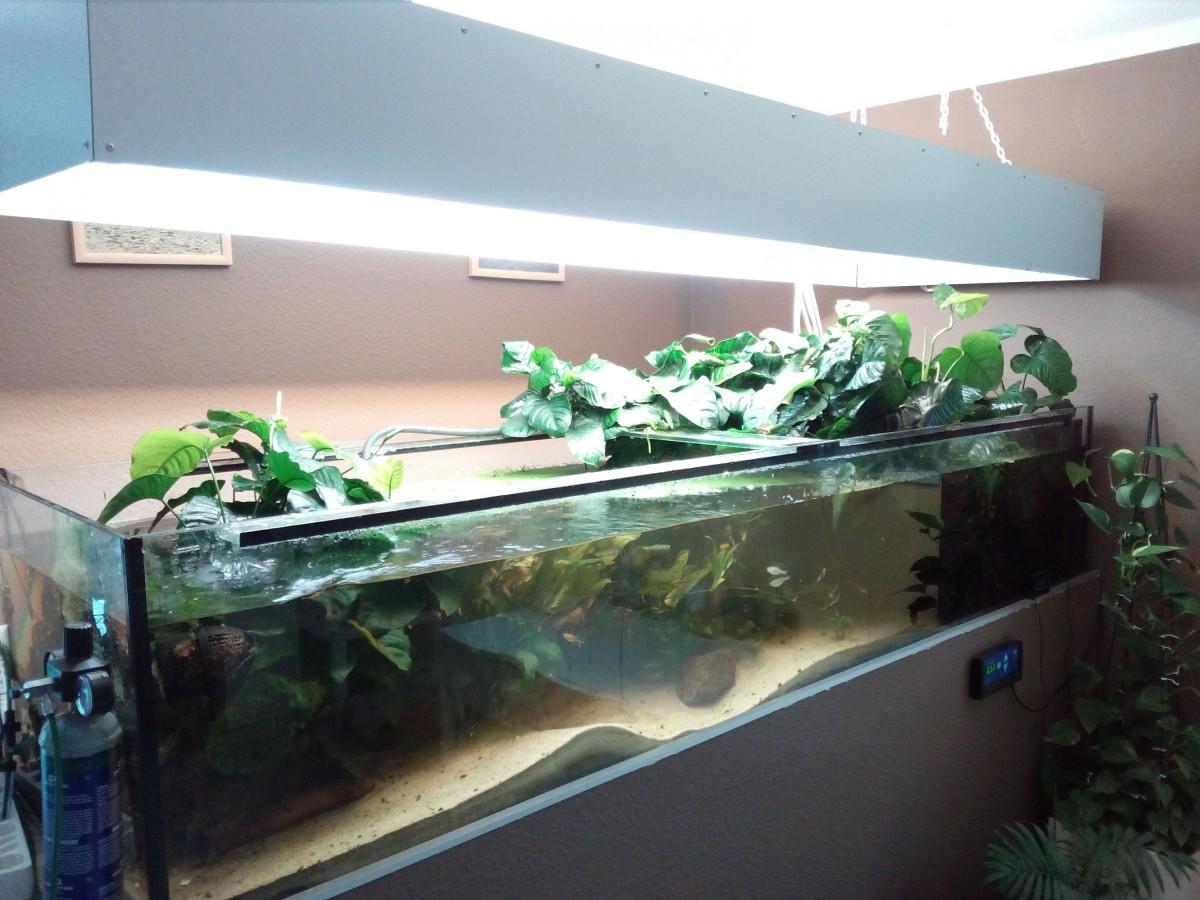 Aquarium 600l Anubias