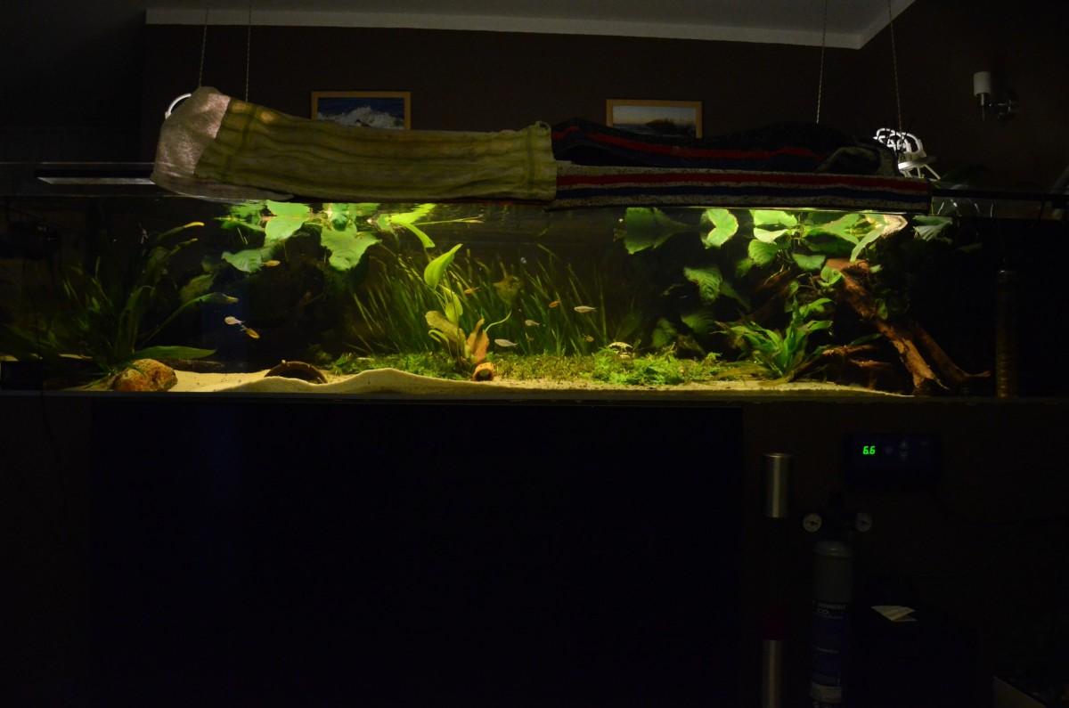 Aquarium 600l frisch eingerichtet